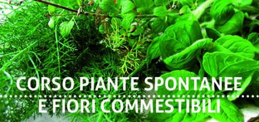 corso_erbe_spontanee_tre_ruote (2)